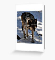 Stick your hand in the fence, i dare you! Greeting Card