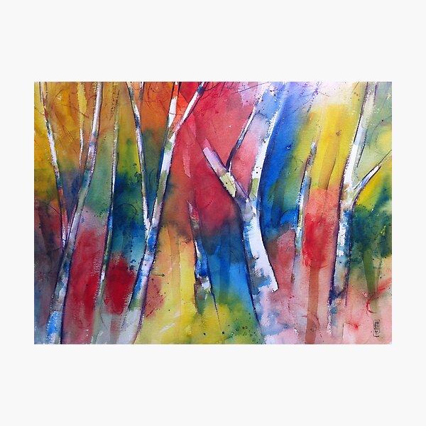 Alberi nel bosco Photographic Print