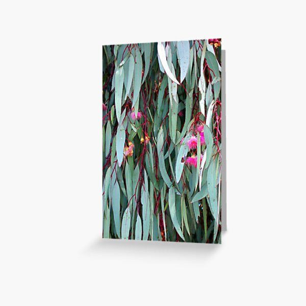 Red Ironbark Greeting Card