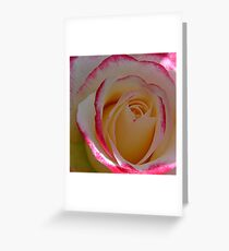 A single bloom Greeting Card