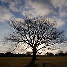 Oak Tree in the Morning by funkybunch