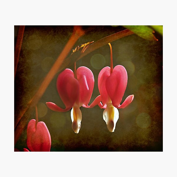 Touching Hearts Photographic Print