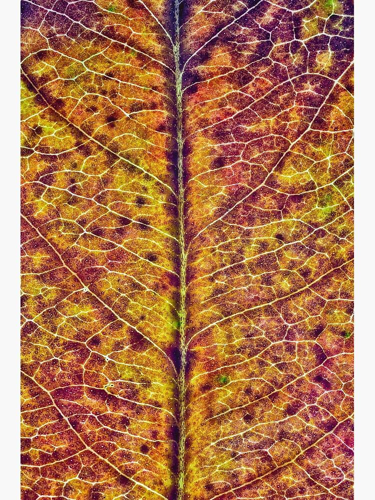 Leaf Sturcture by fardad