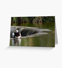 Pelican on Edwardes Lake Park Greeting Card
