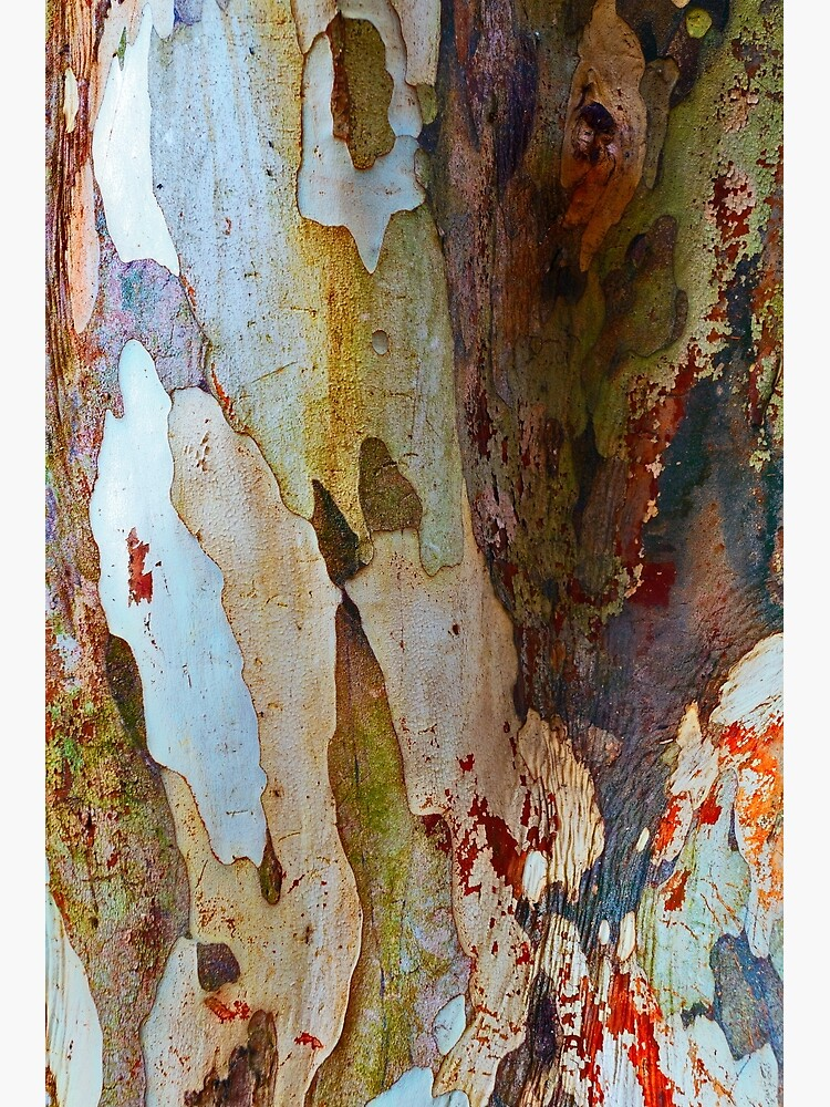 Leopard tree bark by fardad