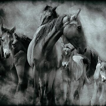 Wild Horses by colinsart