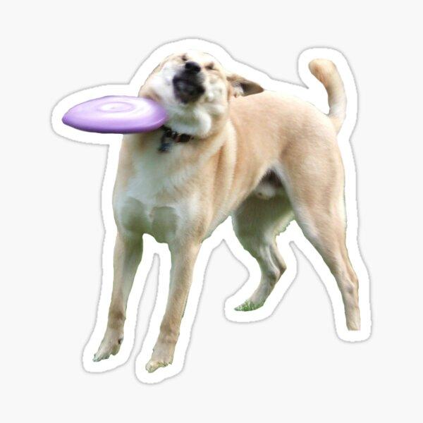 Frisbee Doge Sticker
