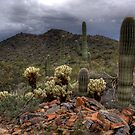 Cacti Friends and Family by Sue  Cullumber