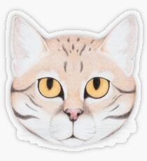 Black-footed Cat Transparent Sticker