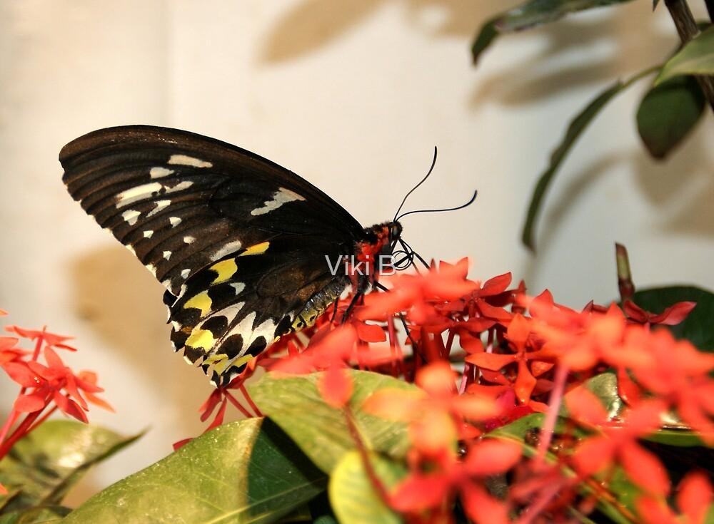 Butterfly V by Viki B