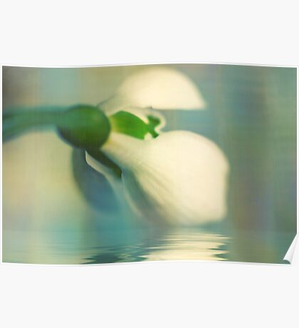 To a snowdrop Poster