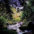 Woodland View by Paul Finnegan