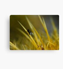 Surfing the Spine Canvas Print