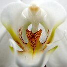 Resident Area 51 Alien - A New Perspective on Orchid Life by ©Ashley Edmonds Cooke