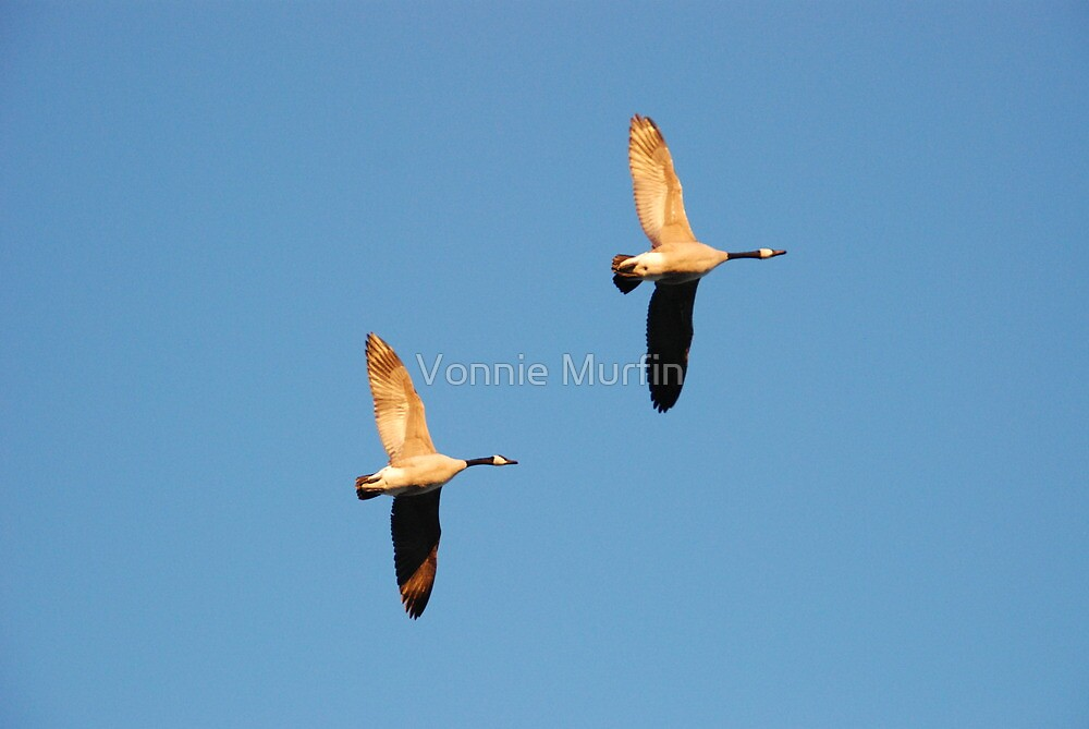 Flying Geese  by Vonnie Murfin