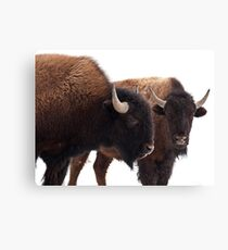 Dynamic Duo Canvas Print