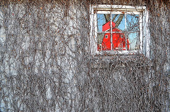 The Window by Jessica Snyder