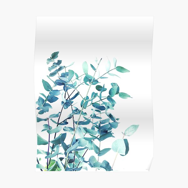 Mint and Blue Eucalyptus Branches Poster