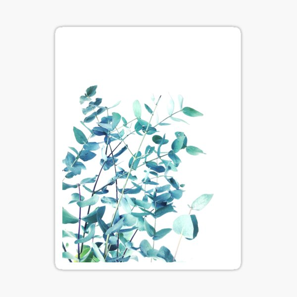 Mint and Blue Eucalyptus Branches Sticker