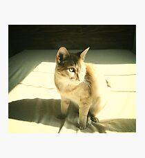 mew. Photographic Print