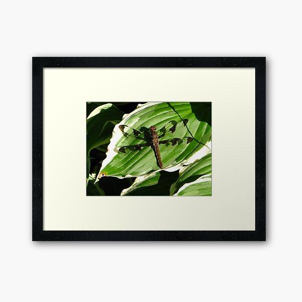 Whitetail Framed Art Print