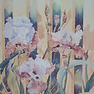 Iris on Fence, Kerry Scally, Dumbleyung W.A. by scallyart
