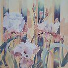 Iris on Fence, Kerry Scally, Dumbleyung W.A. by scallyart