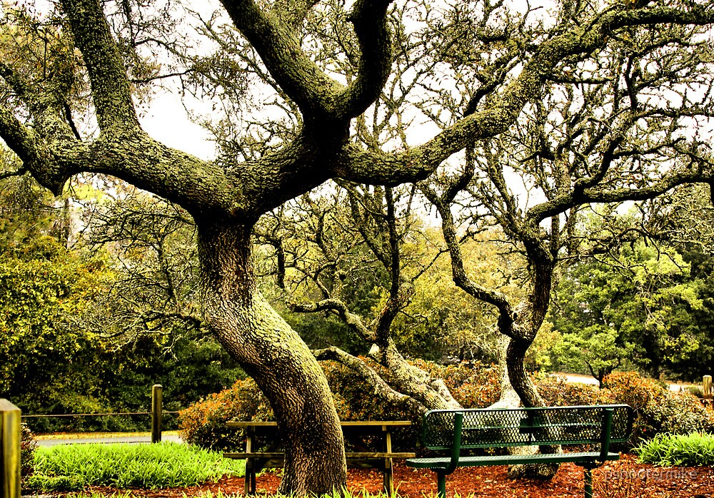 The Park Bench under the Oaks by pshootermike