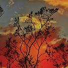 Against a Fiery Sky by Barbara  Brown