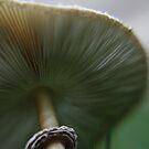 Mushroom by jayded