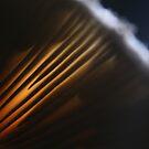 Backlight Mushroom by jayded