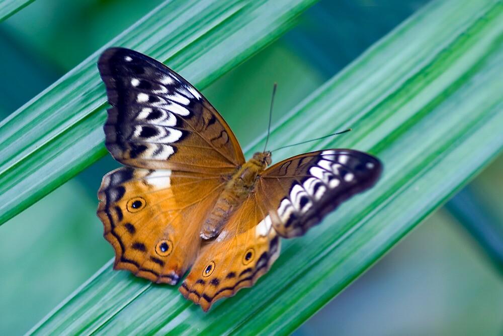 Cruiser Two - Kuranda butterfly sanctuary by Jenny Dean