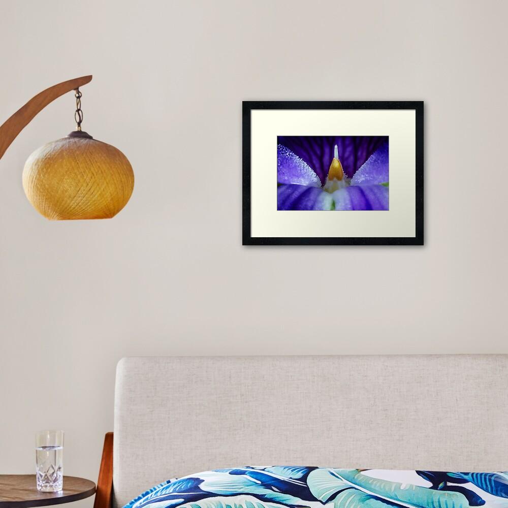 Australian Native Violet Framed Art Print