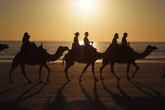 Camels on cable beach by rjcphotography