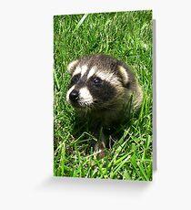 Babby Raccoon Greeting Card