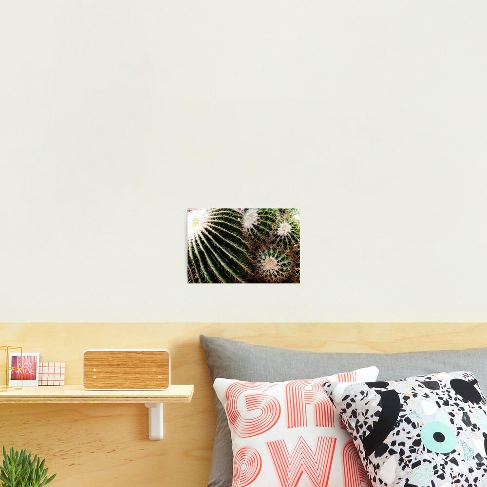 Cactus closeup Photographic Print