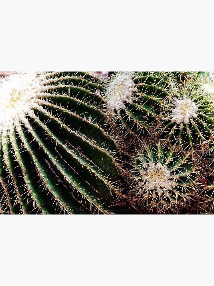 Cactus closeup by fardad