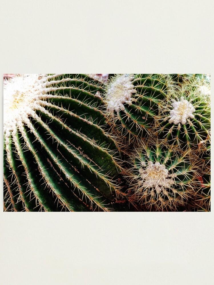 Alternate view of Cactus closeup Photographic Print