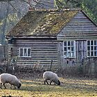 The Old Garden Shed by relayer51