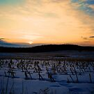 Winter Cornfield Sunset by Trenton Purdy