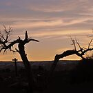 Tree Sihlouettes in Arizona by Susan Russell