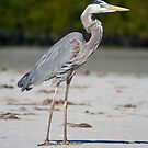 Windy Heron by Karen  Moore