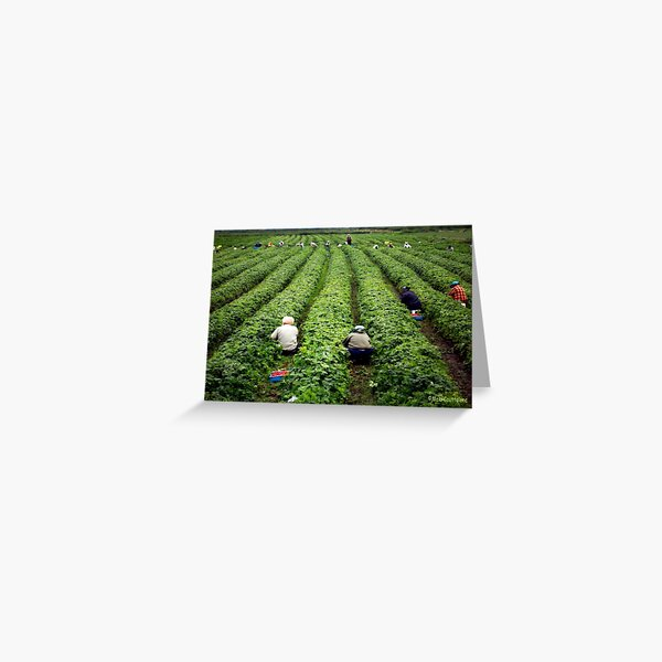 Strawberry Pickers Greeting Card