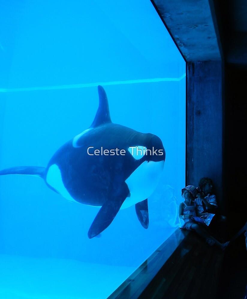 Sea Experience by Celeste Thinks