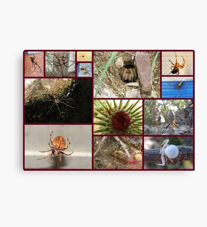 Arachnaphobia ~ Fear of Spiders Canvas Print