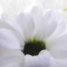 White Soft Beauty For Cards Wall Art And Home Decor by hurmerinta