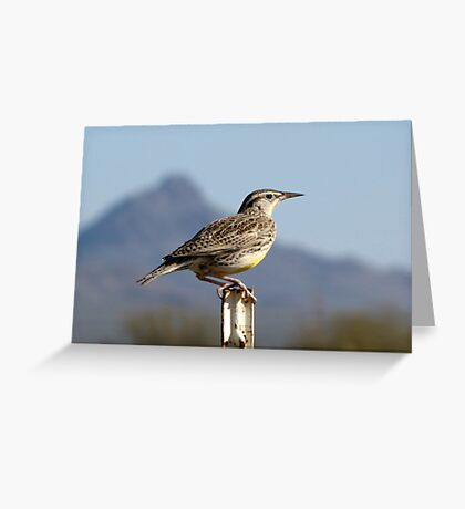 Meadowlark ~ Western Greeting Card