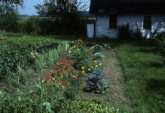 Grandma's garden by nealbarnett