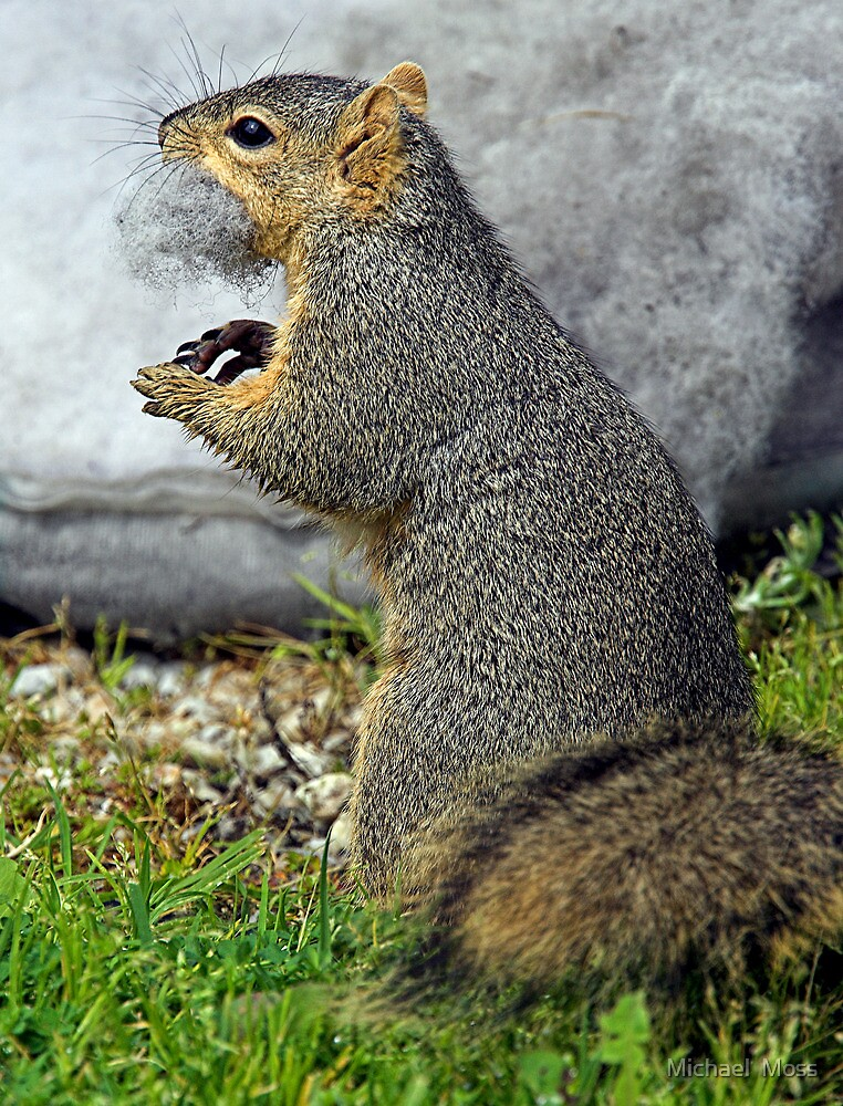 Rabid Squirrel or Stuffing Stealer? by Michael  Moss