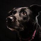 Mrs. Lucky Labrador by Johanne Brunet